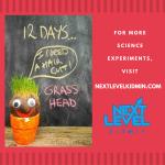 Grow Grass Head
