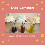 Dyed Carnations