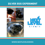 Silver Egg Experiment
